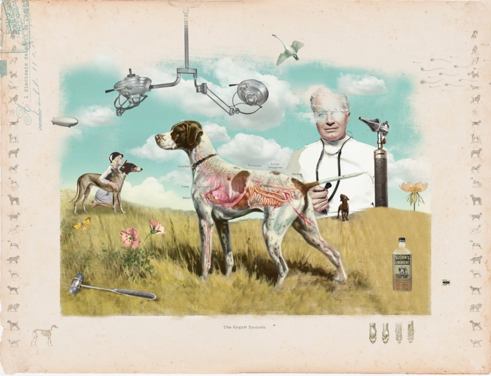 Voor dierenkliniek Eersel, digitale collage op doek