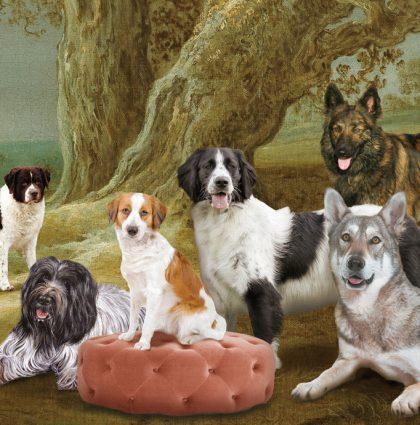 Dutch Dogs landscape